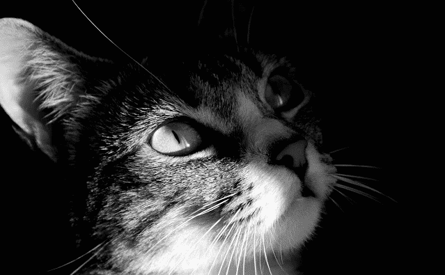 chrome-theme-cat-1